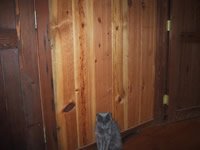 Ponderosa Pine Recycled Paneling 1